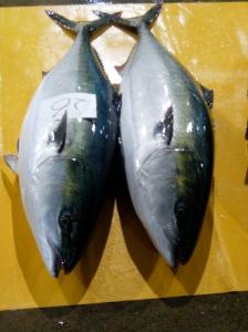 Kanburi (winter yellowtail)