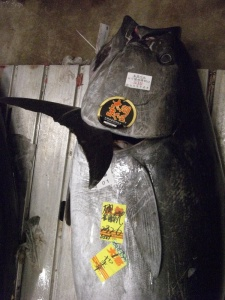 The Winner Aomori Northern Bluefin
