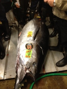 2013 222 kg Oma Maguro