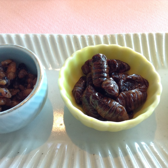 Kaiko no Sanagi (silkworm)